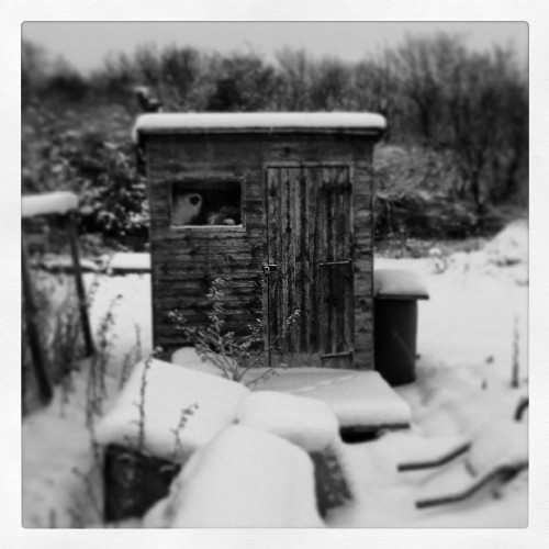Kirkbymoorside Allotment shed in the snow