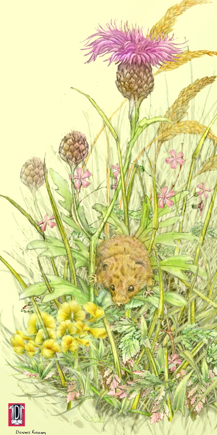 an observation of insects in a meadow The floodplain meadows explore three distinct meadow habitats to find out about fascinating connections how important is the bumblebee to a key ecosystem service, pollination.