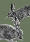 Hares by Coral Rose