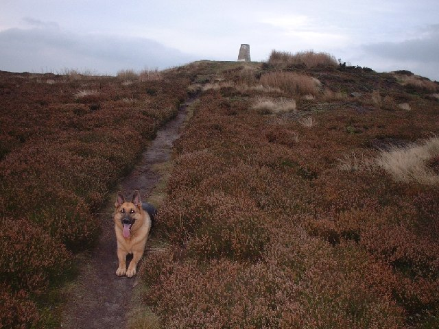 A happy walker on Urra Moor, photo by Enrico Giacani for Geograph